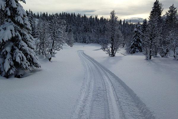 På vei mot Skjønnegrammin